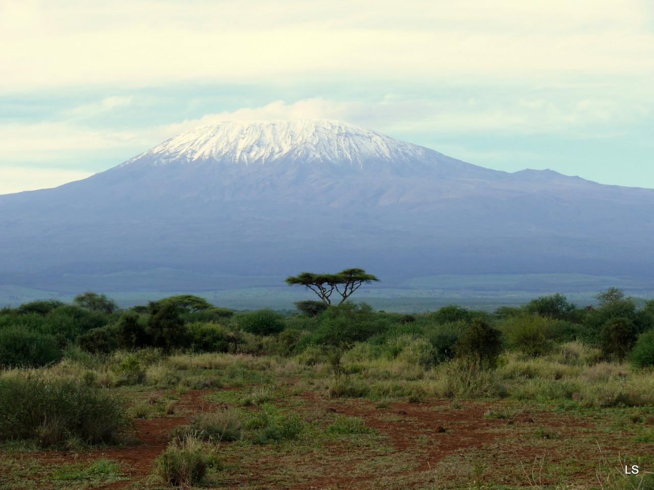 Kilimandjaro/Kilimanjaro (1)