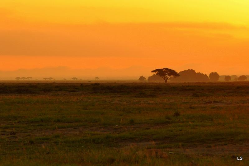 Amboseli (23)