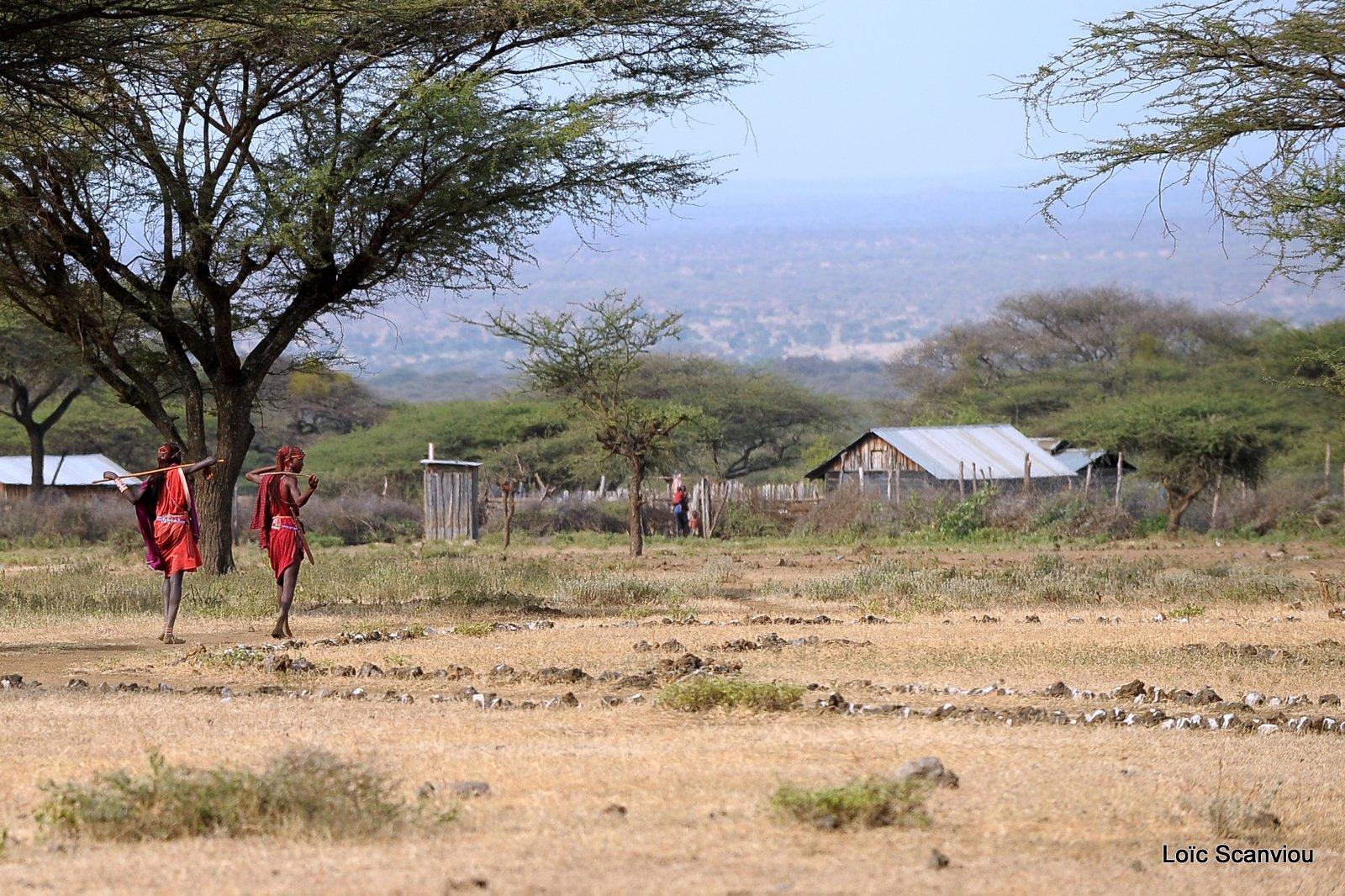 Village massaï (1)