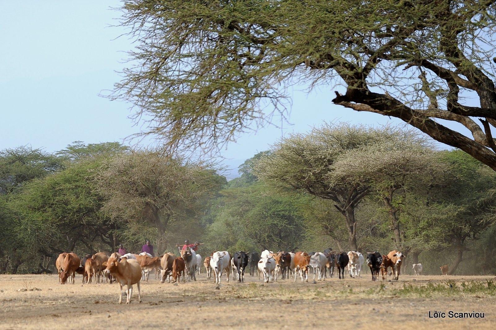 Village massaï (3)