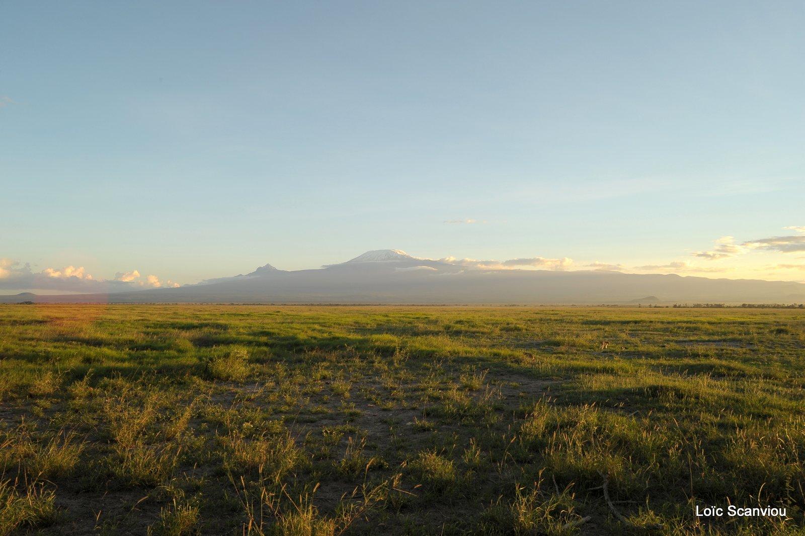 Amboseli (1)
