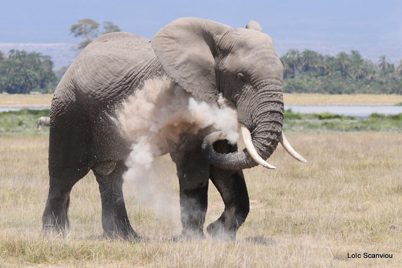 Amboseli 2016
