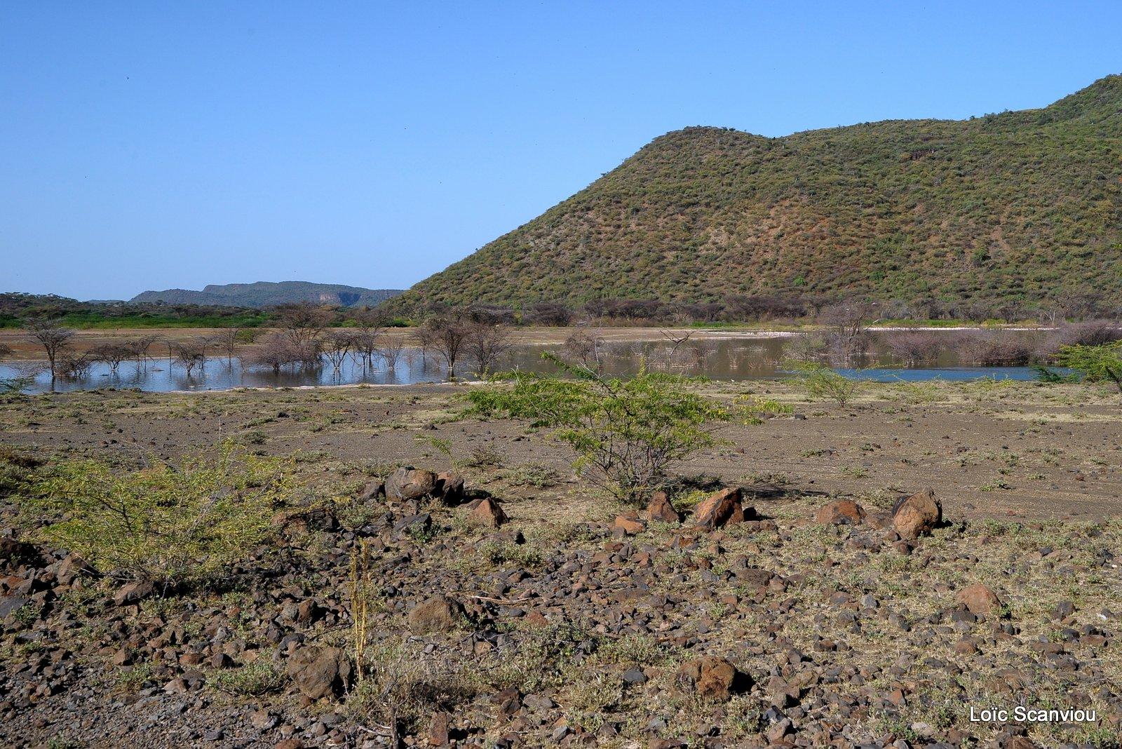 Bogoria 2013 (3)