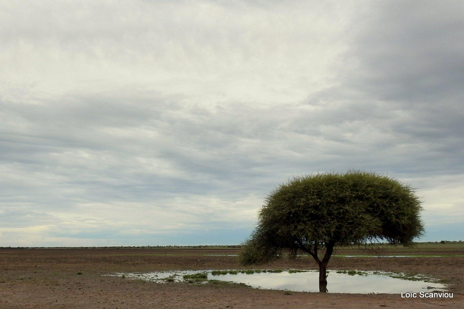 Central Kalahari 2020 (154)