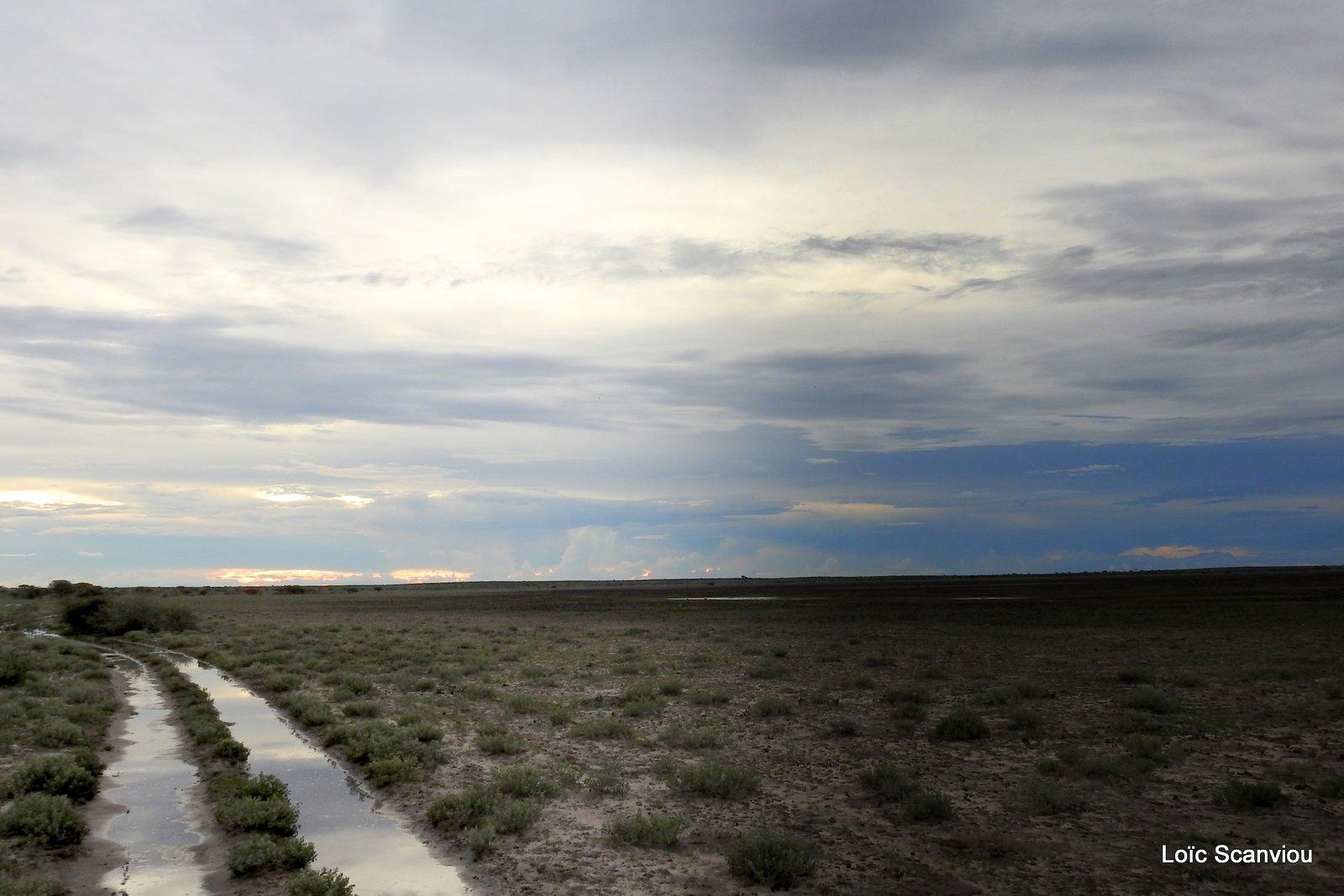 Central Kalahari 2020 (155)