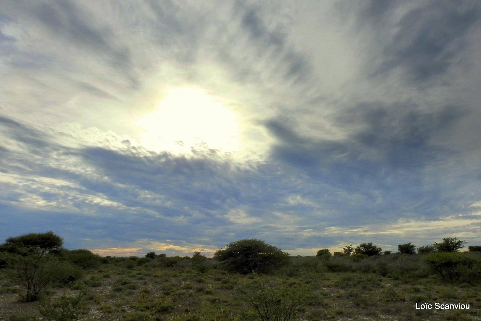 Central Kalahari 2020 (156)