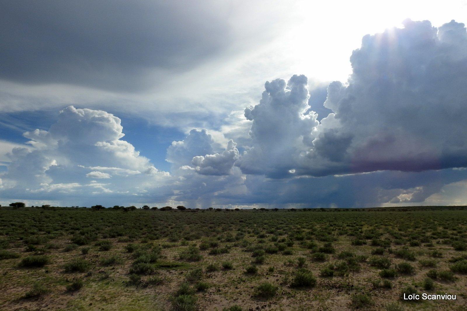 Central Kalahari 2020 (157)