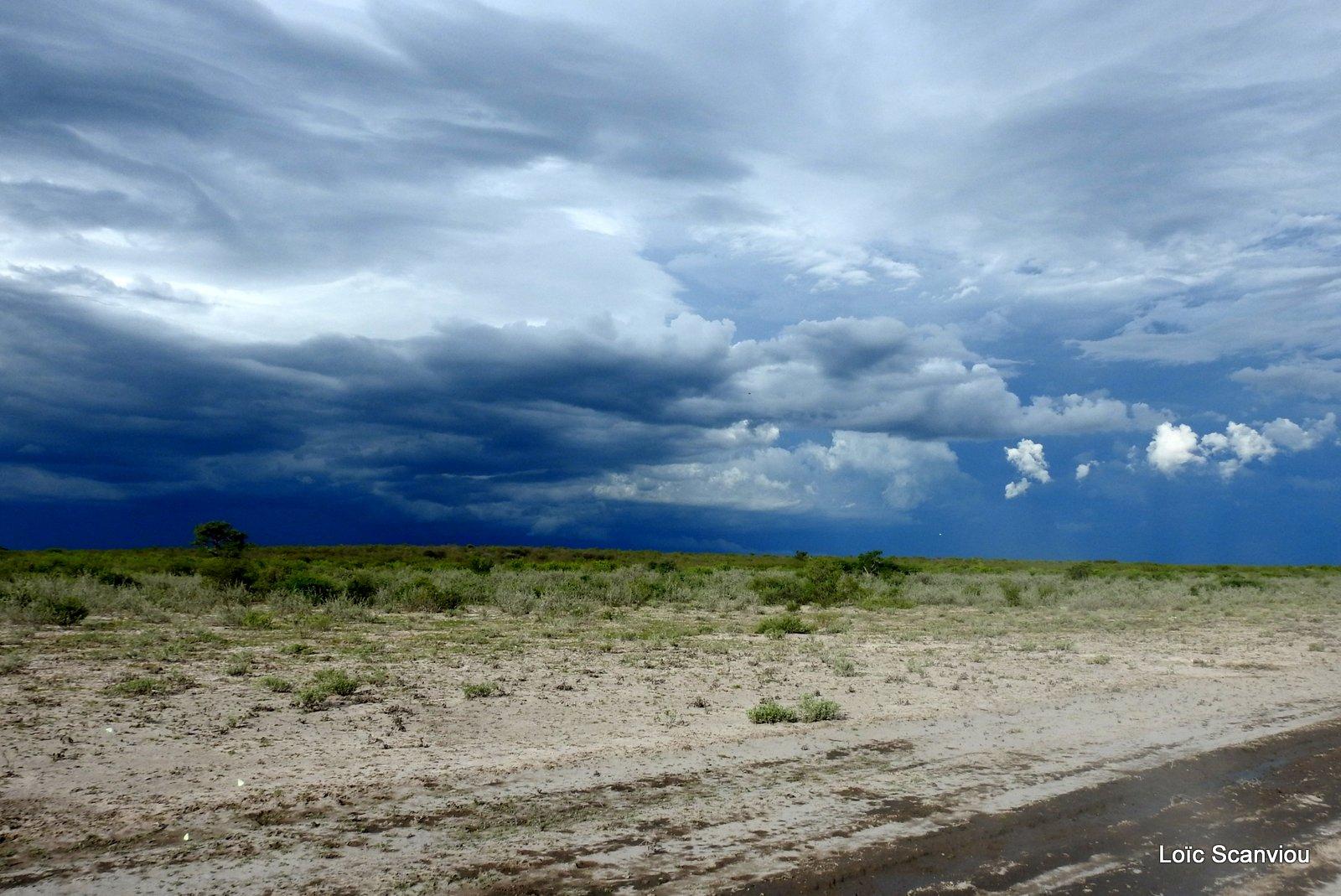 Central Kalahari 2020 (158)