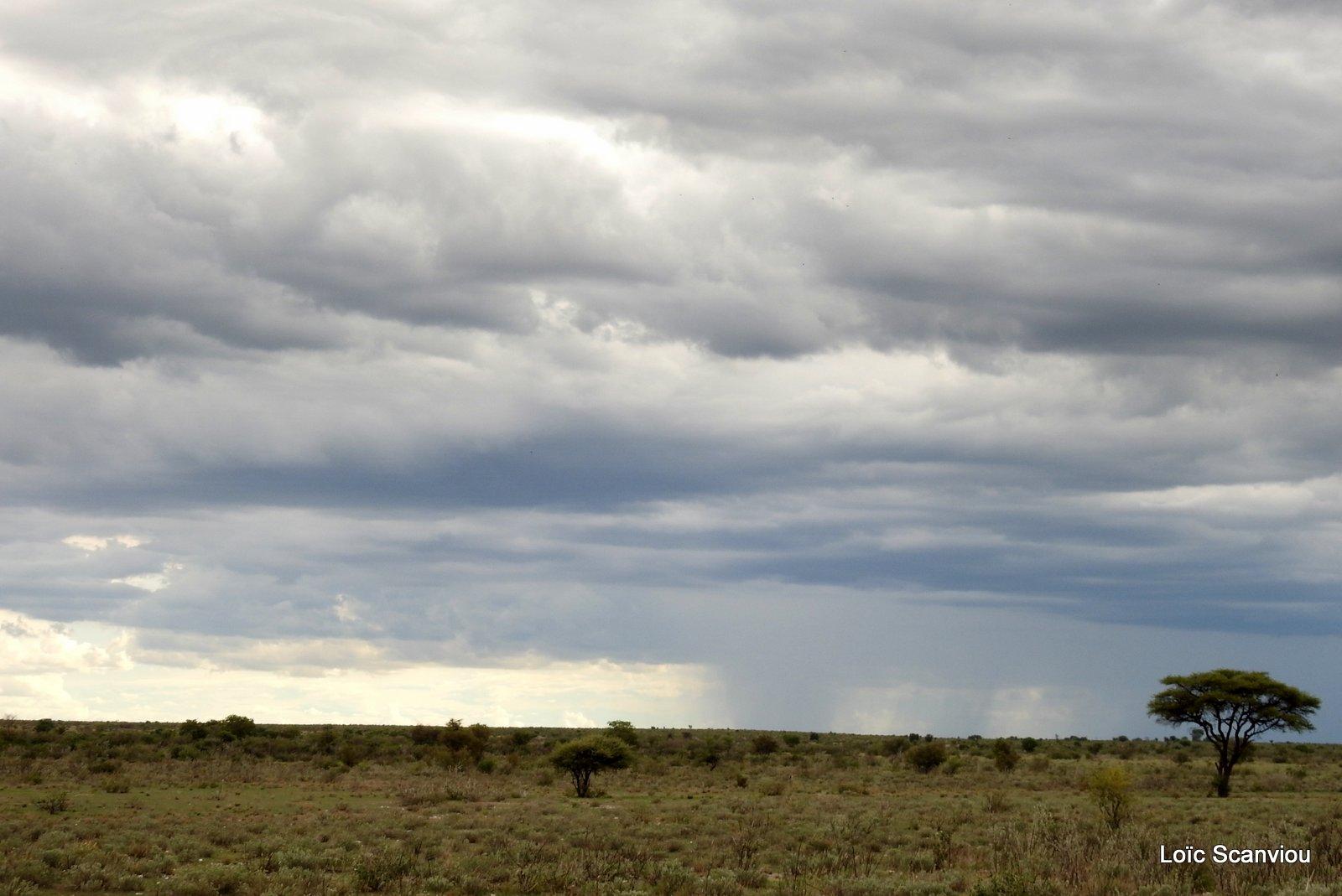 Central Kalahari 2020 (159)
