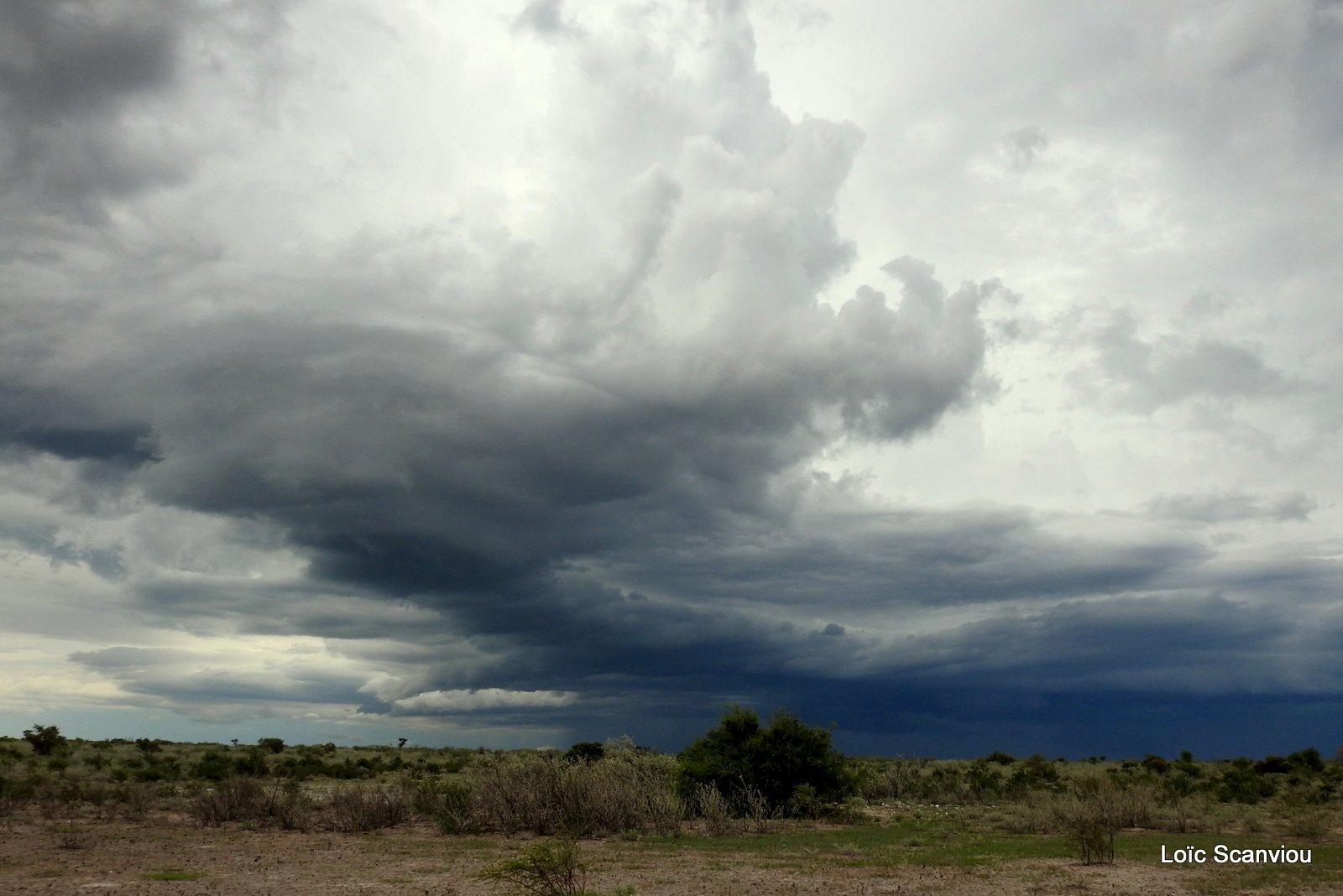 Central Kalahari 2020 (160)