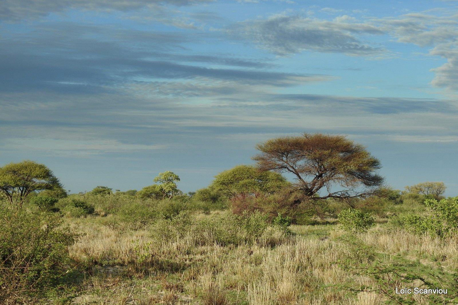 Central Kalahari 2020 (167)