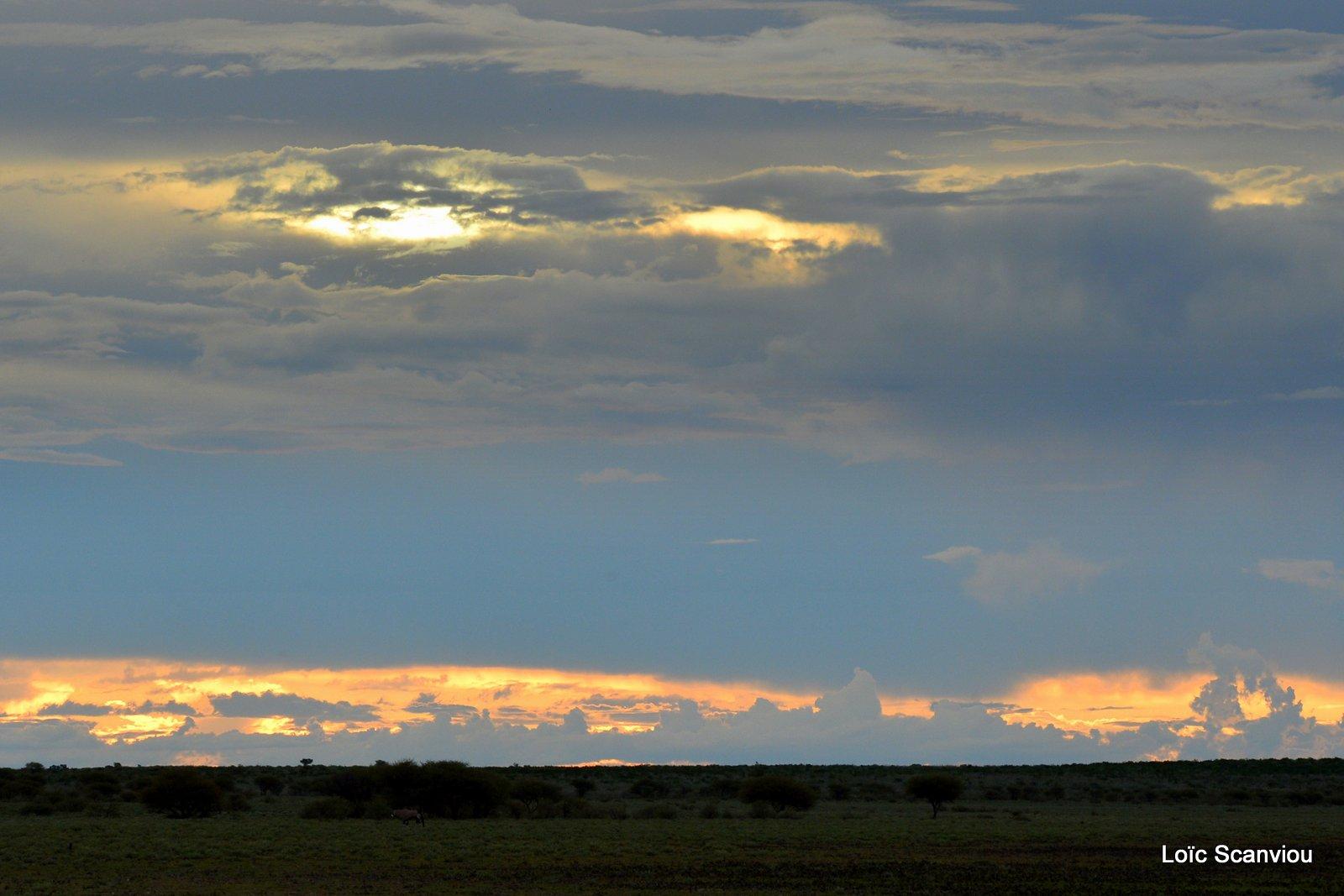 Central Kalahari 2020 (87)