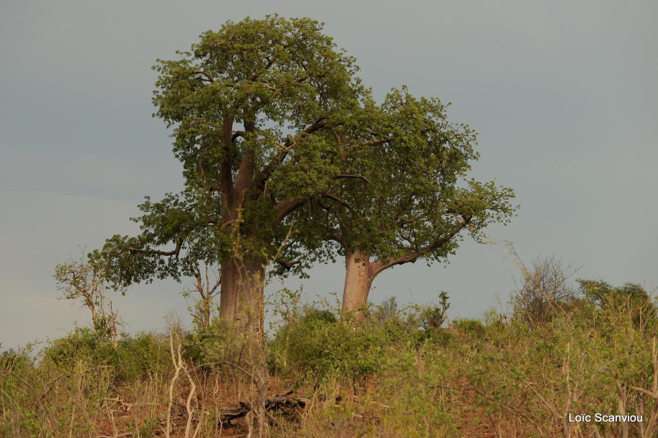 Chobe National Park (1)
