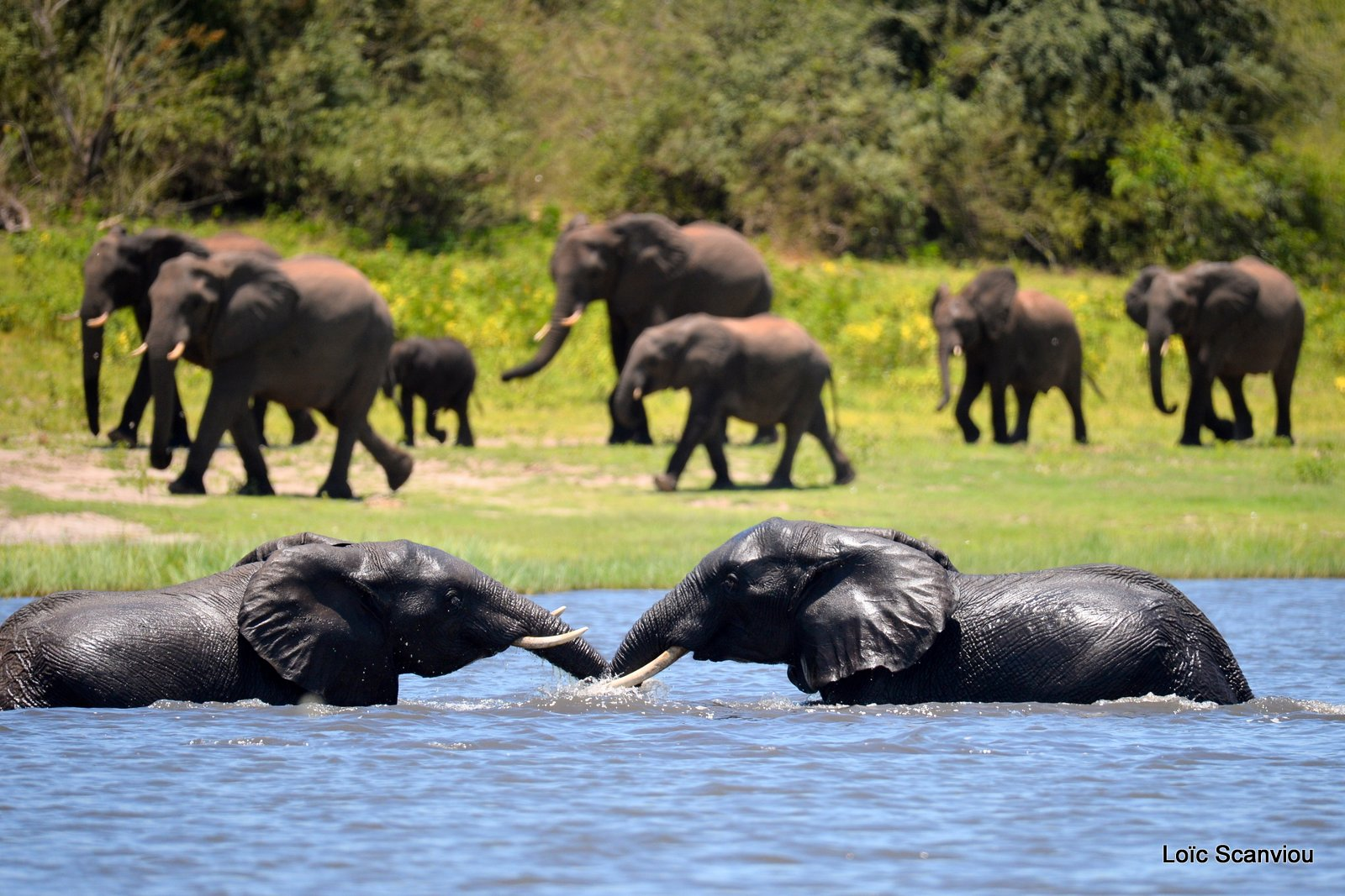Chobe River Front 2020 (2)