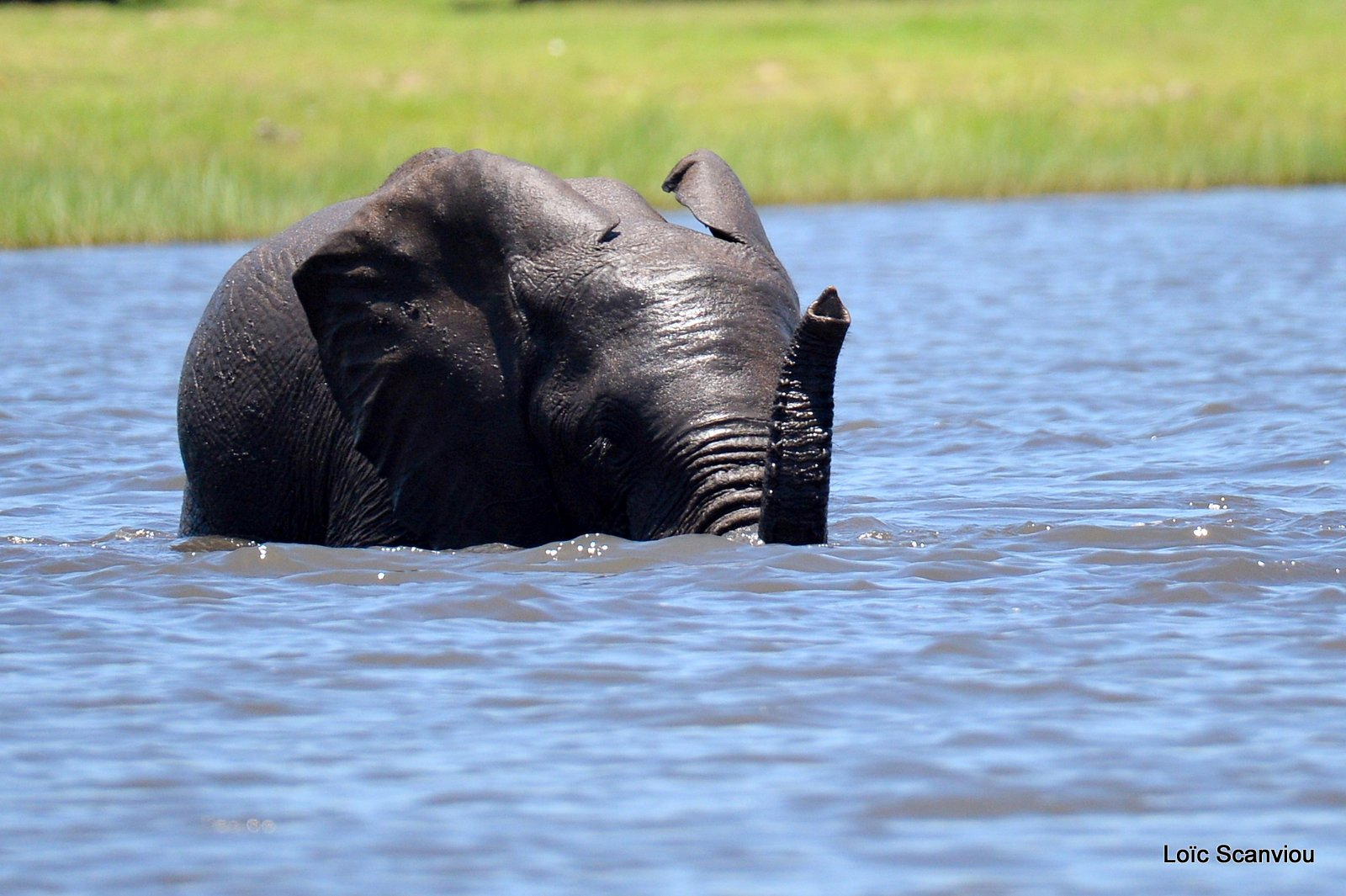 Chobe River Front 2020 (3)