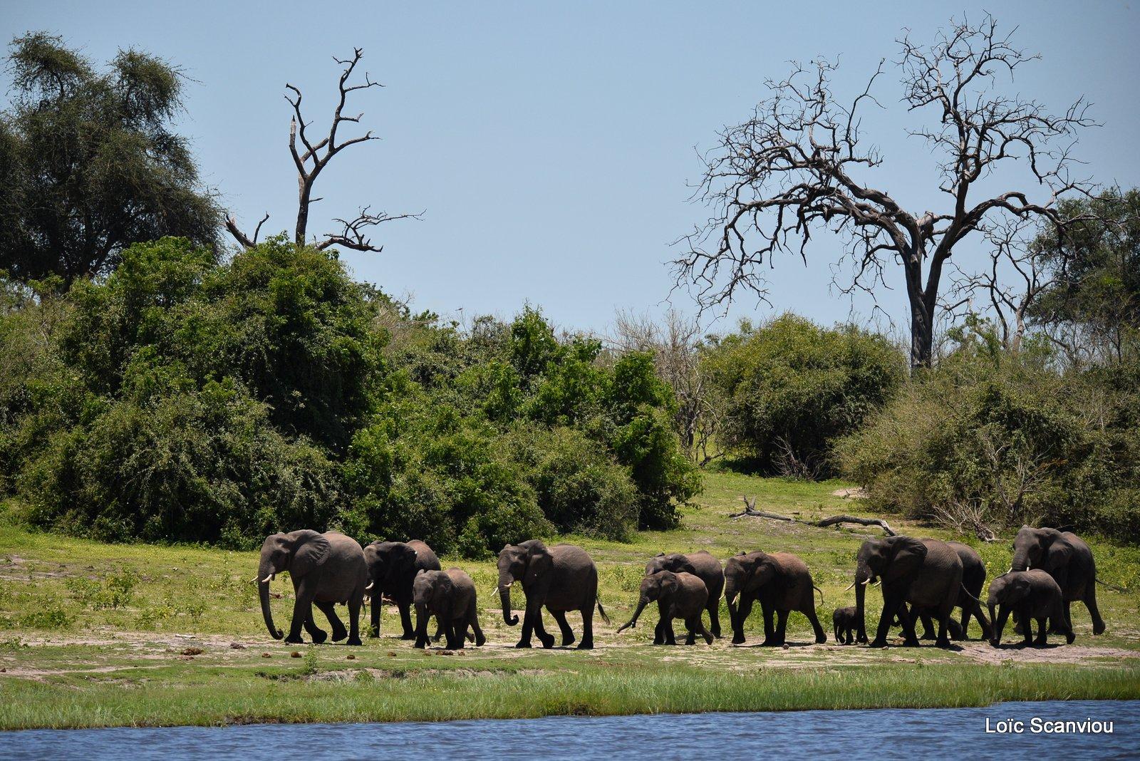 Chobe River Front 2020 (4)