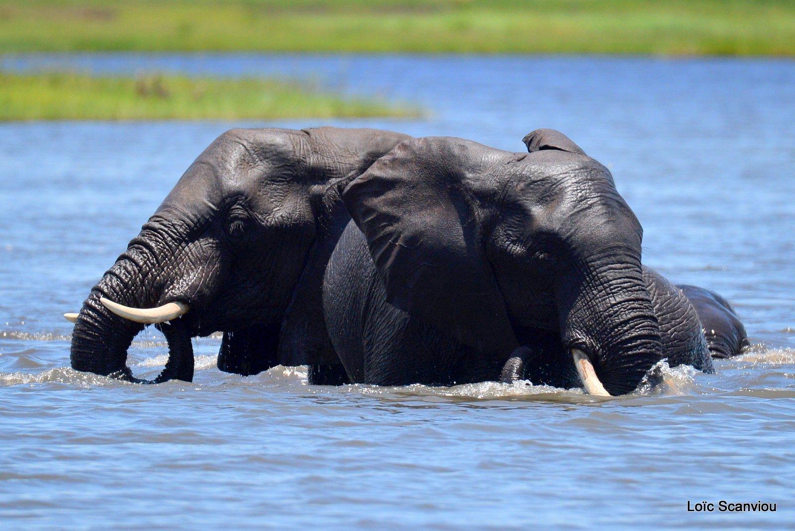 Chobe River Front 2020 (5)