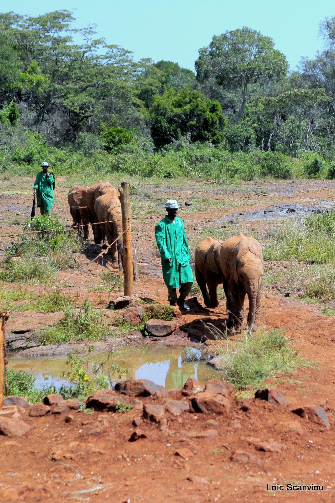 David Sheldrick Wildlife Trust  (1)