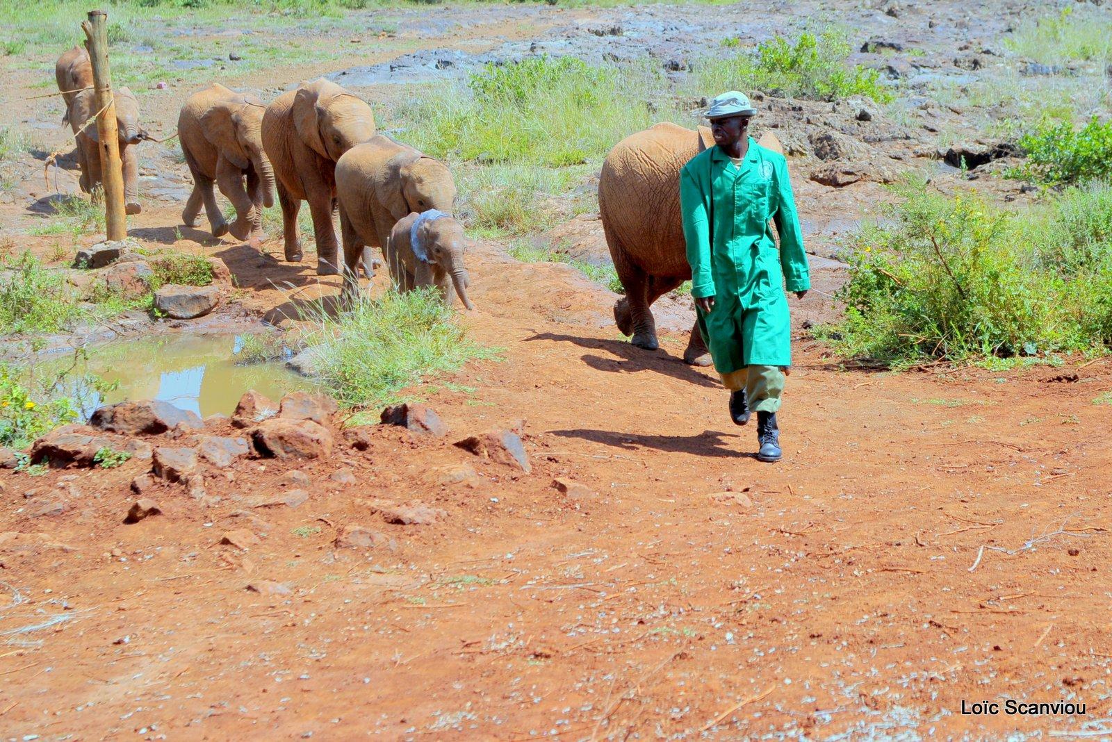 David Sheldrick Wildlife Trust  (2)