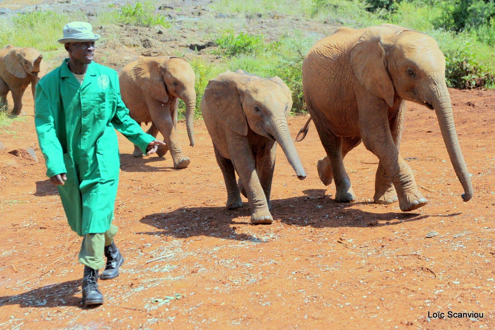 David Sheldrick Wildlife Trust  (3)