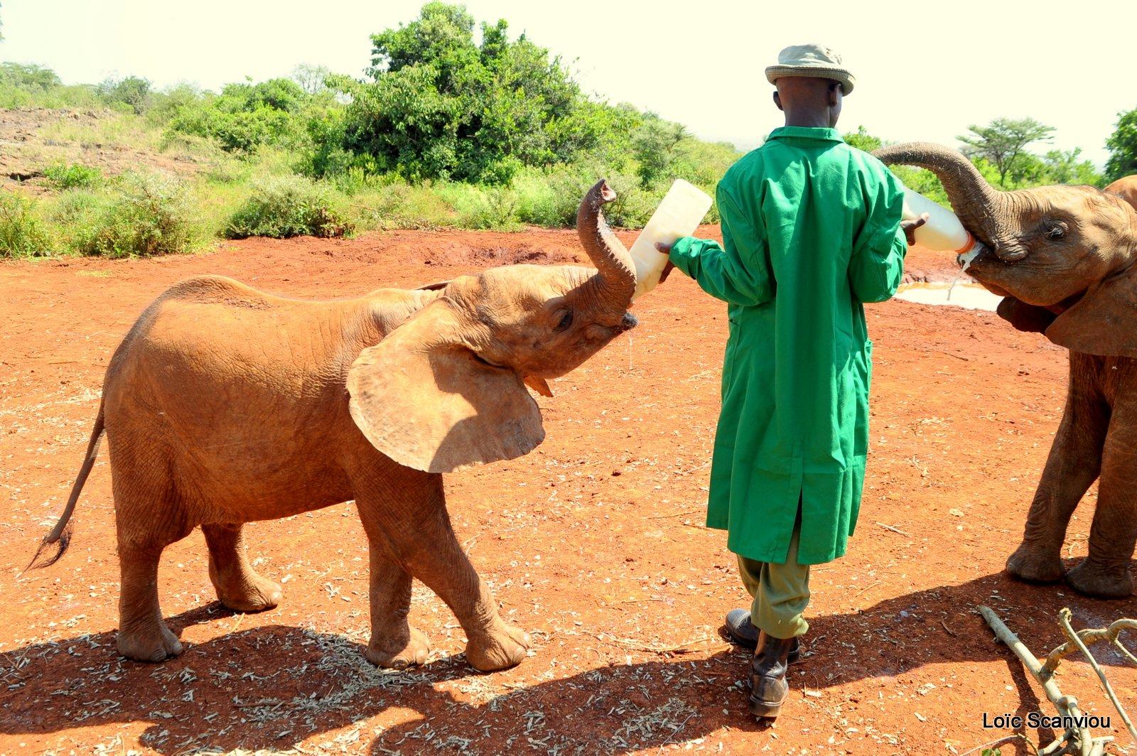 David Sheldrick Wildlife Trust  (6)
