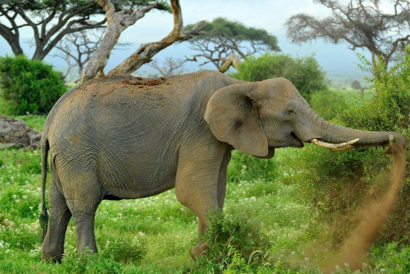 Eléphant (68)