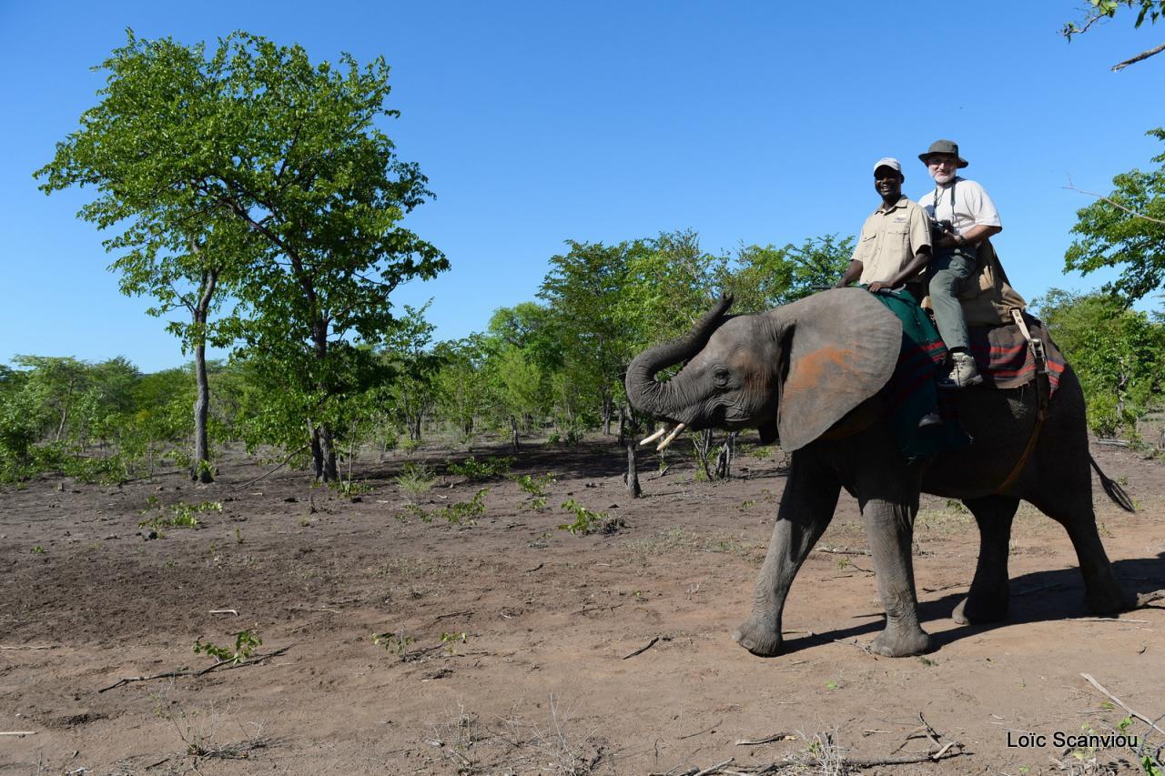 Elephant  back safari (26)