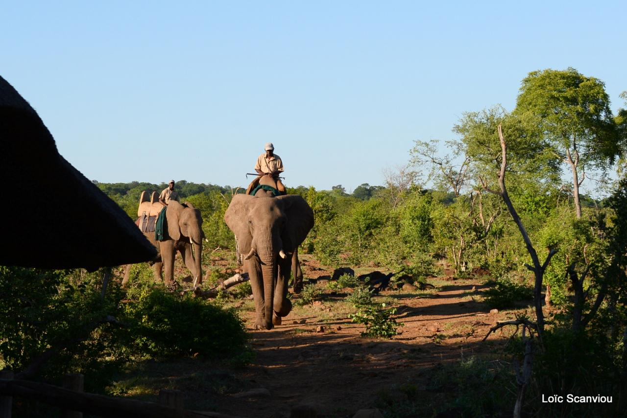 Elephant back safari (4)