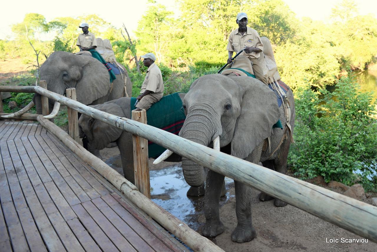 Elephant back safari (5)