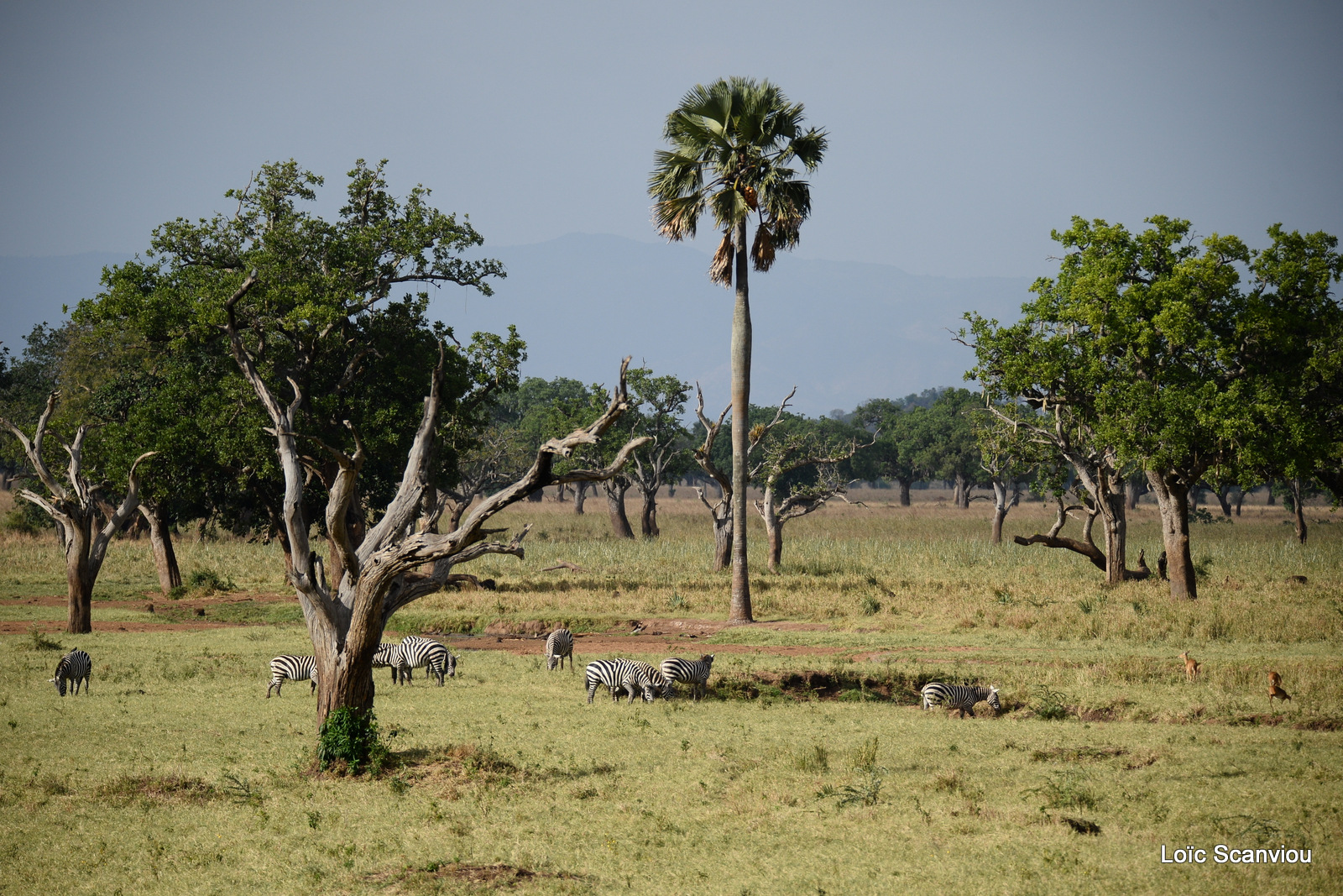 Kidepo Valley National Park (2)