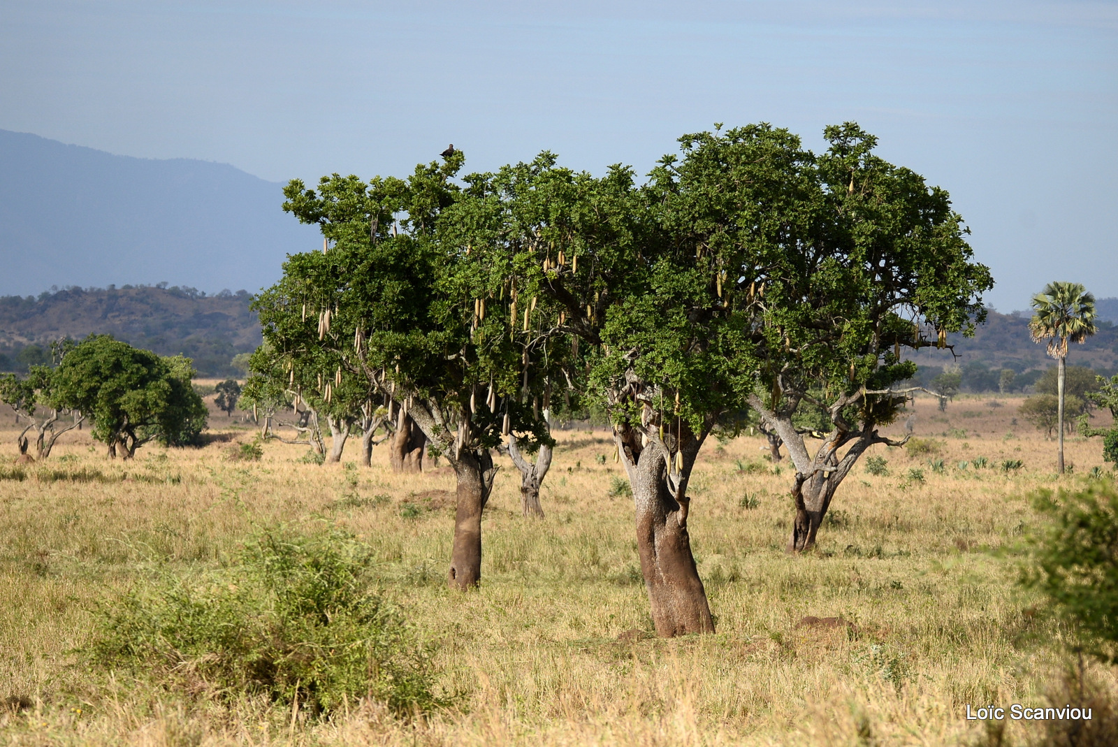 Kidepo Valley National Park (3)