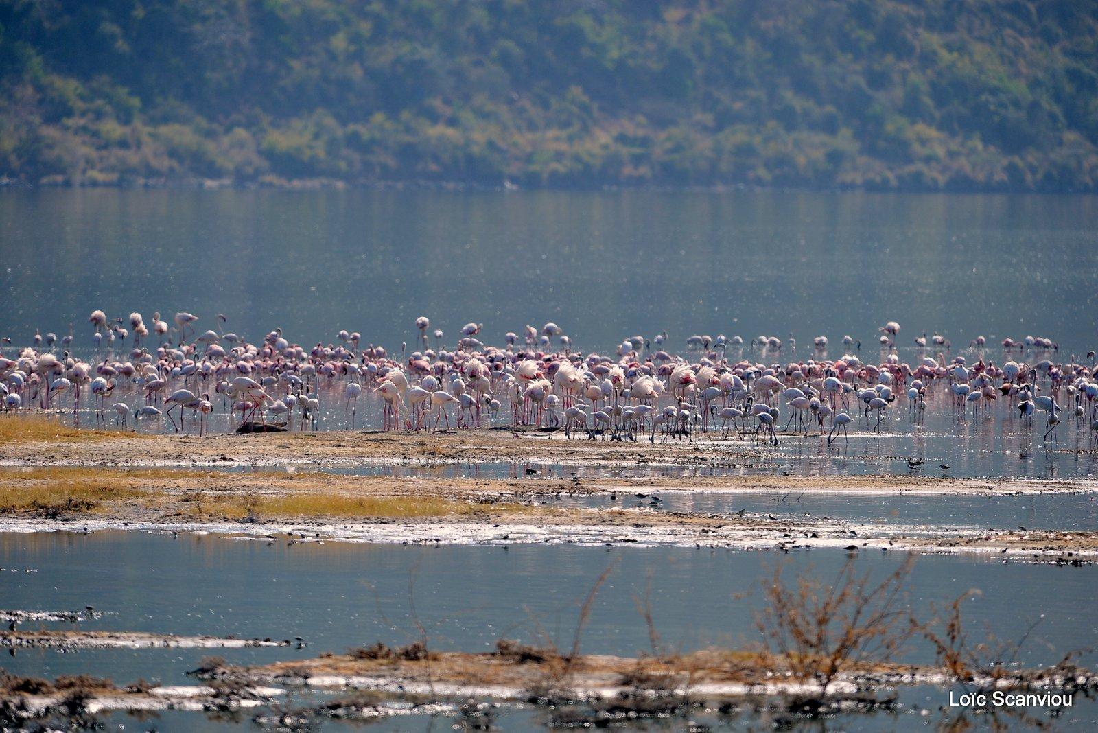 Lac Bogoria 2012 (1)