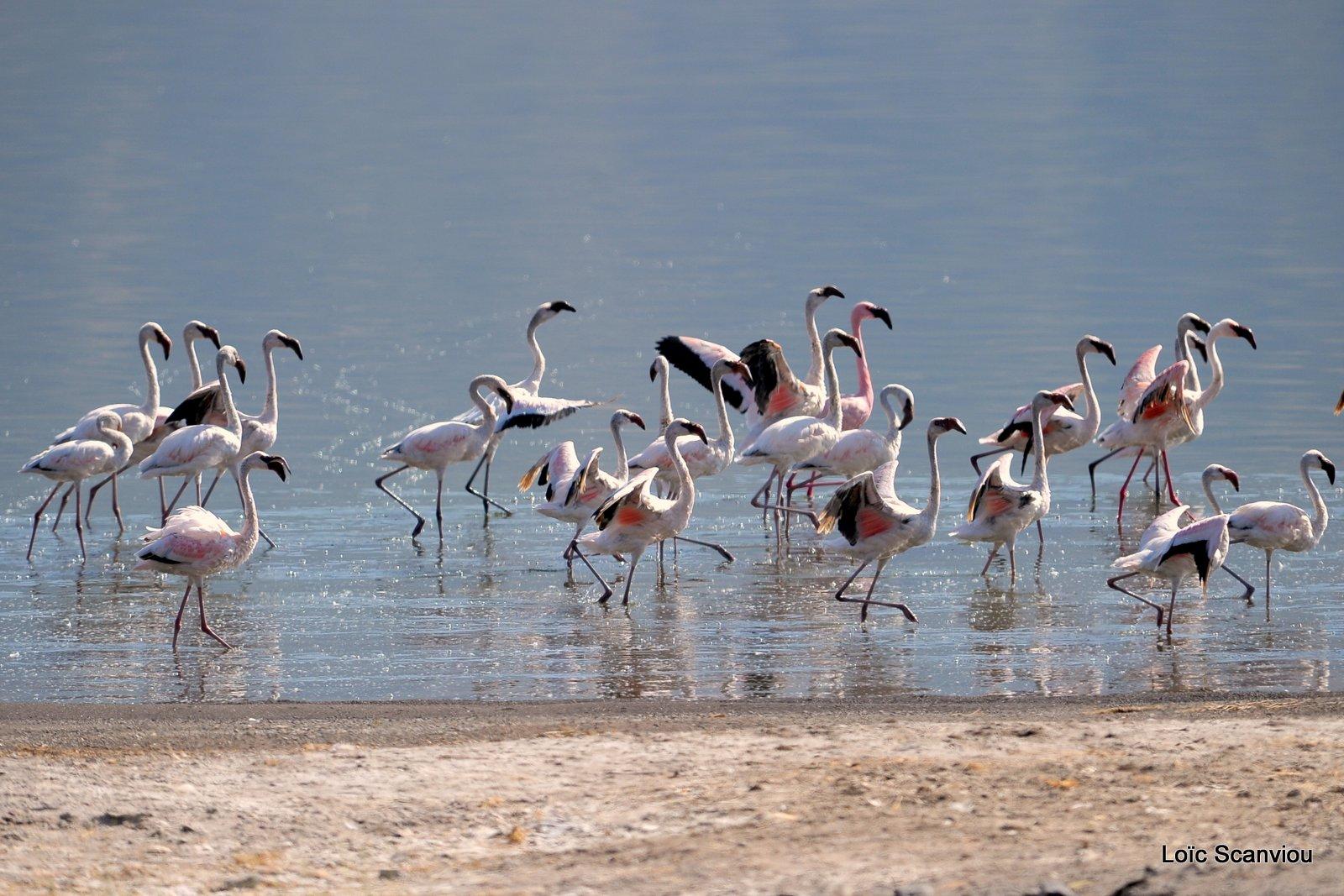 Lac Bogoria 2012 (3)