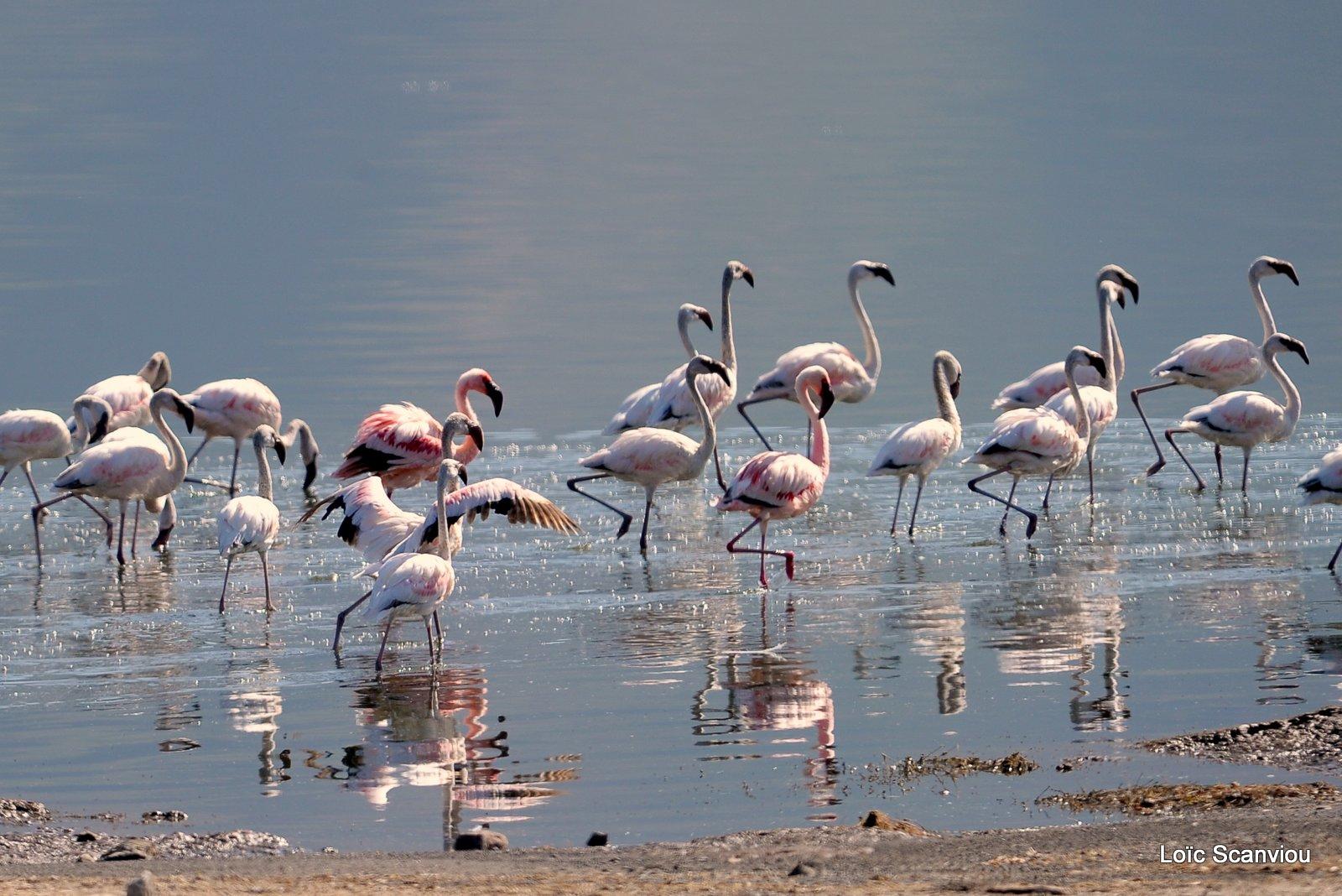 Lac Bogoria 2012 (4)