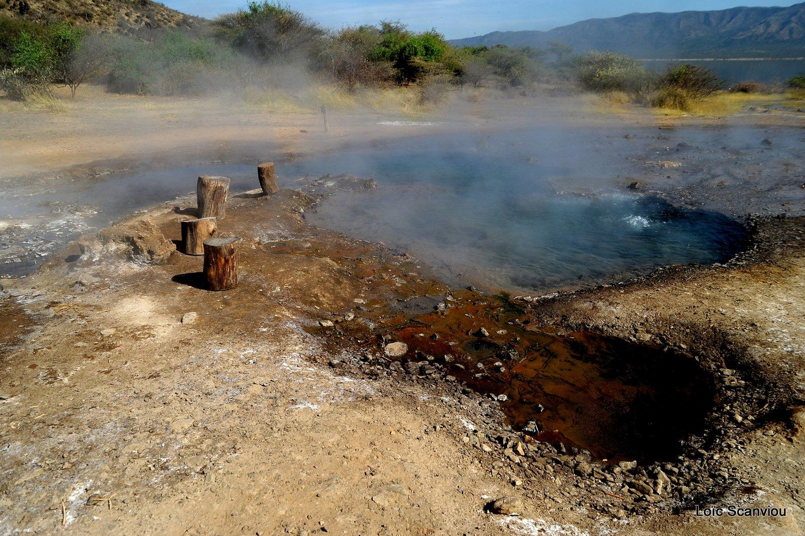 Lac Bogoria 2012 (5)
