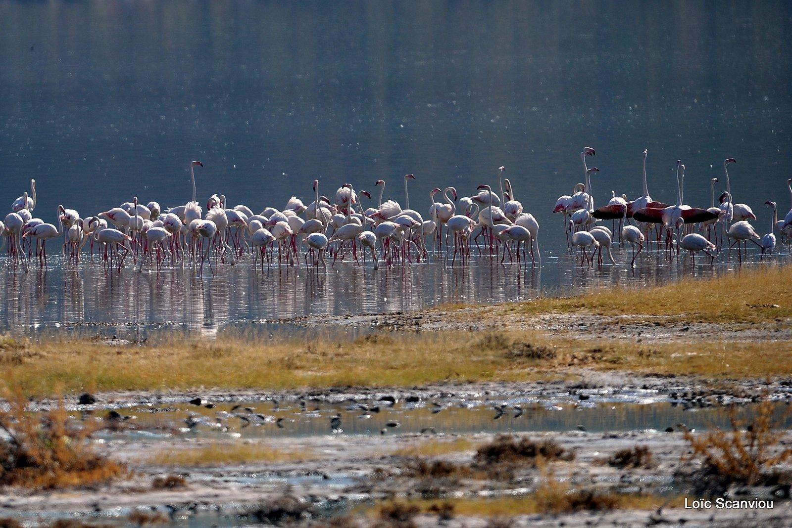Lac Bogoria 2012 (6)