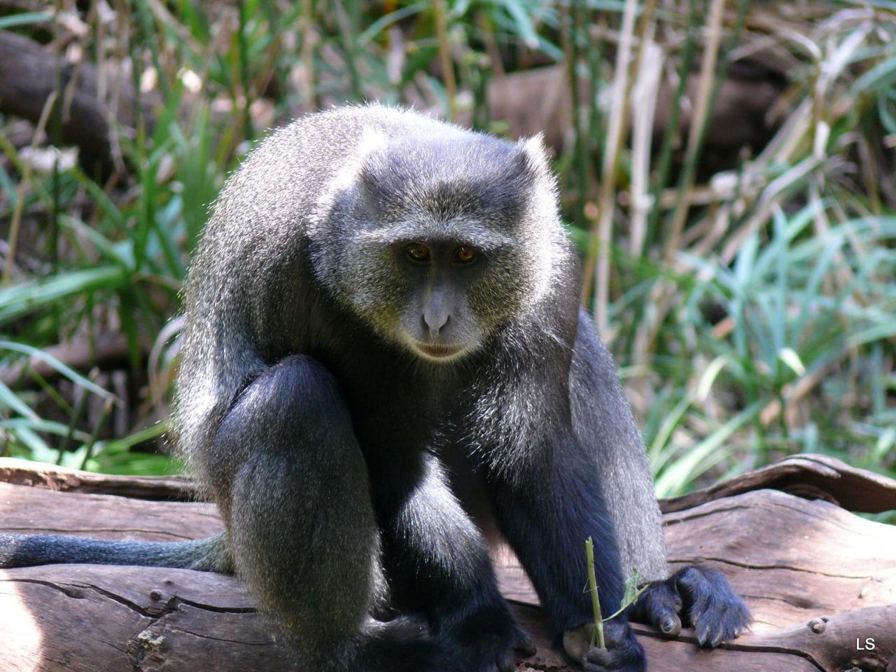 Tanzanie 2008