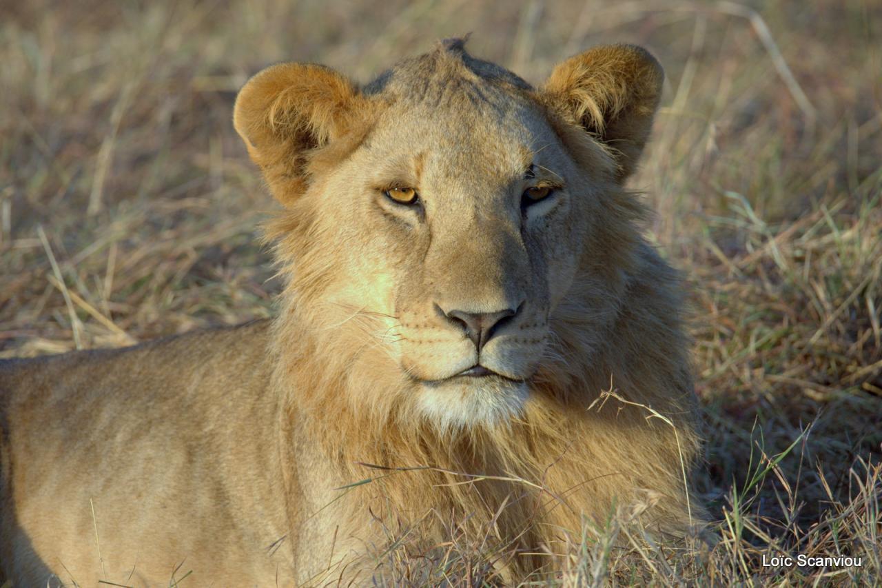 Mara North Conservancy 2016
