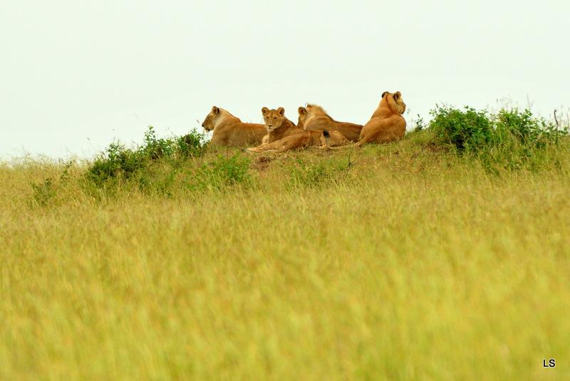 Masaï Mara 2010 (144)