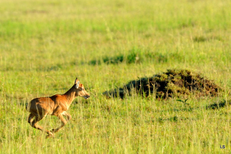 Masaï Mara 2010 (360)