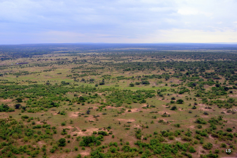 Masaï Mara (13)