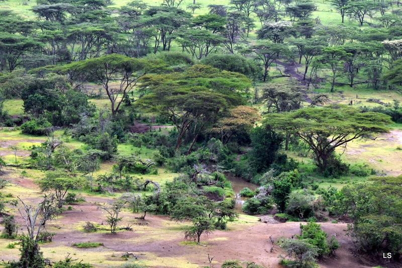 Masaï Mara (22)
