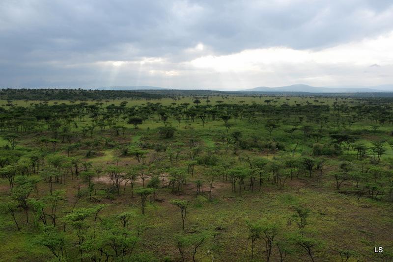 Masaï Mara (24)