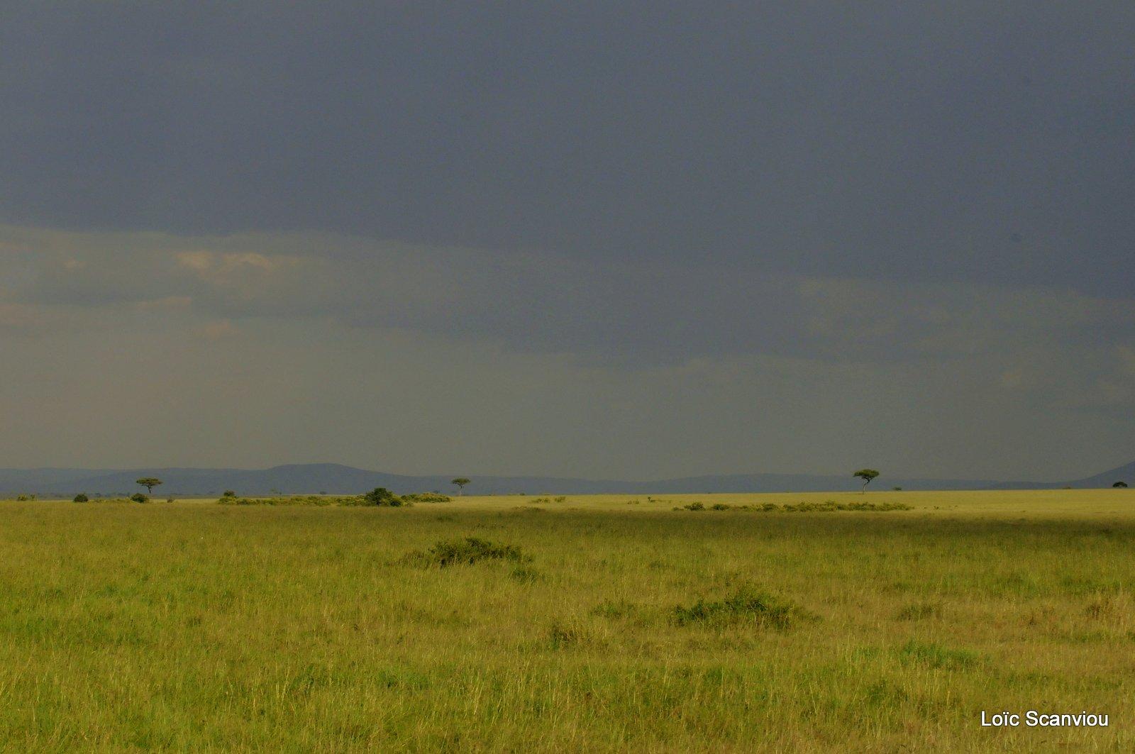 Masaï Mara (4)
