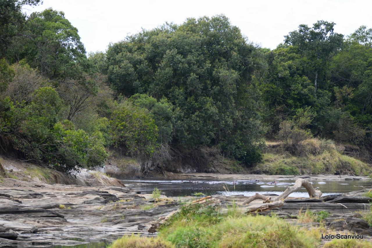 Masaï Mara (1)