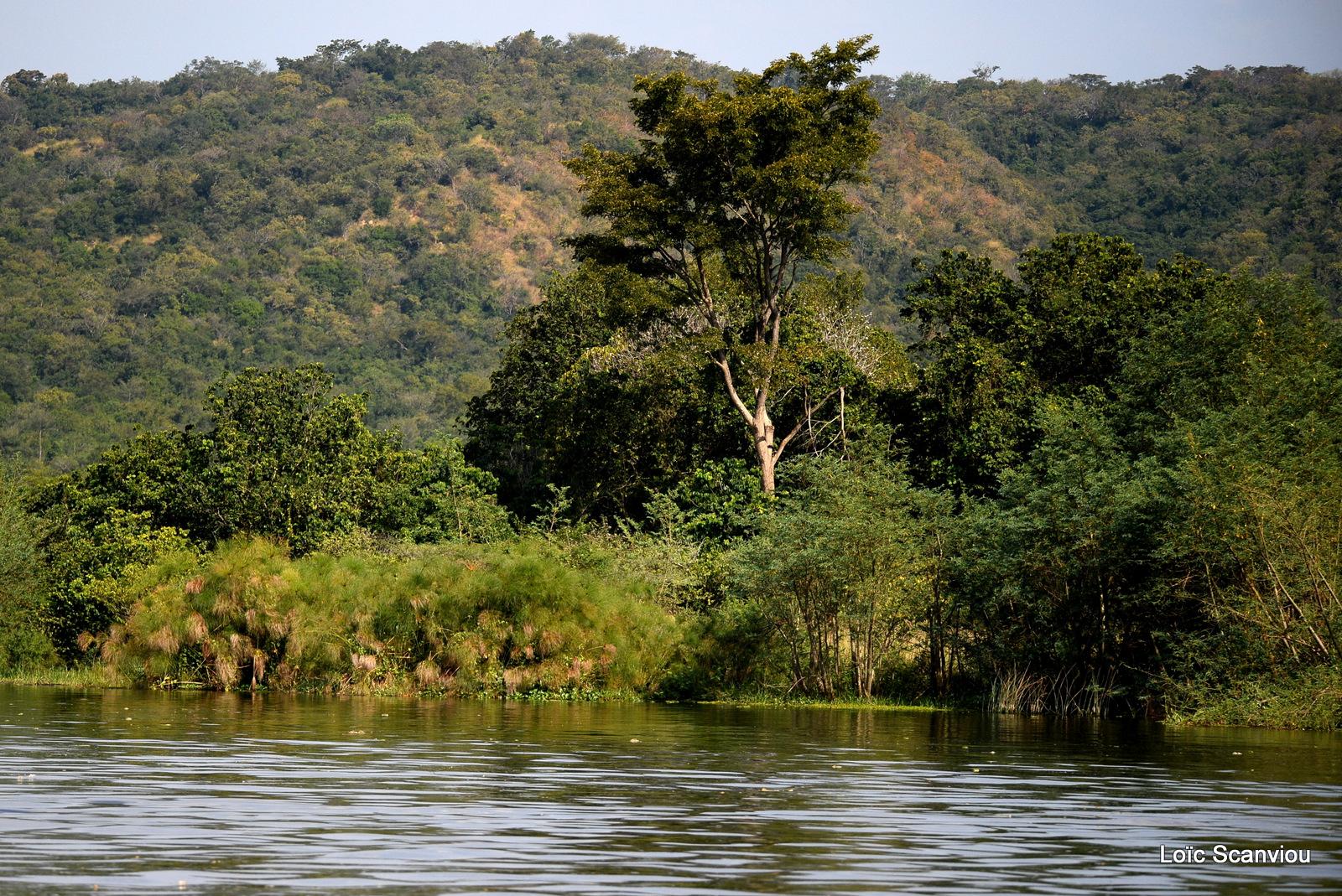 Nil Victoria/Victoria Nile (6)