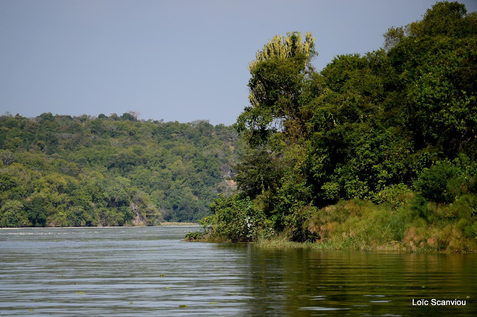 Nil Victoria/Victoria Nile (7)