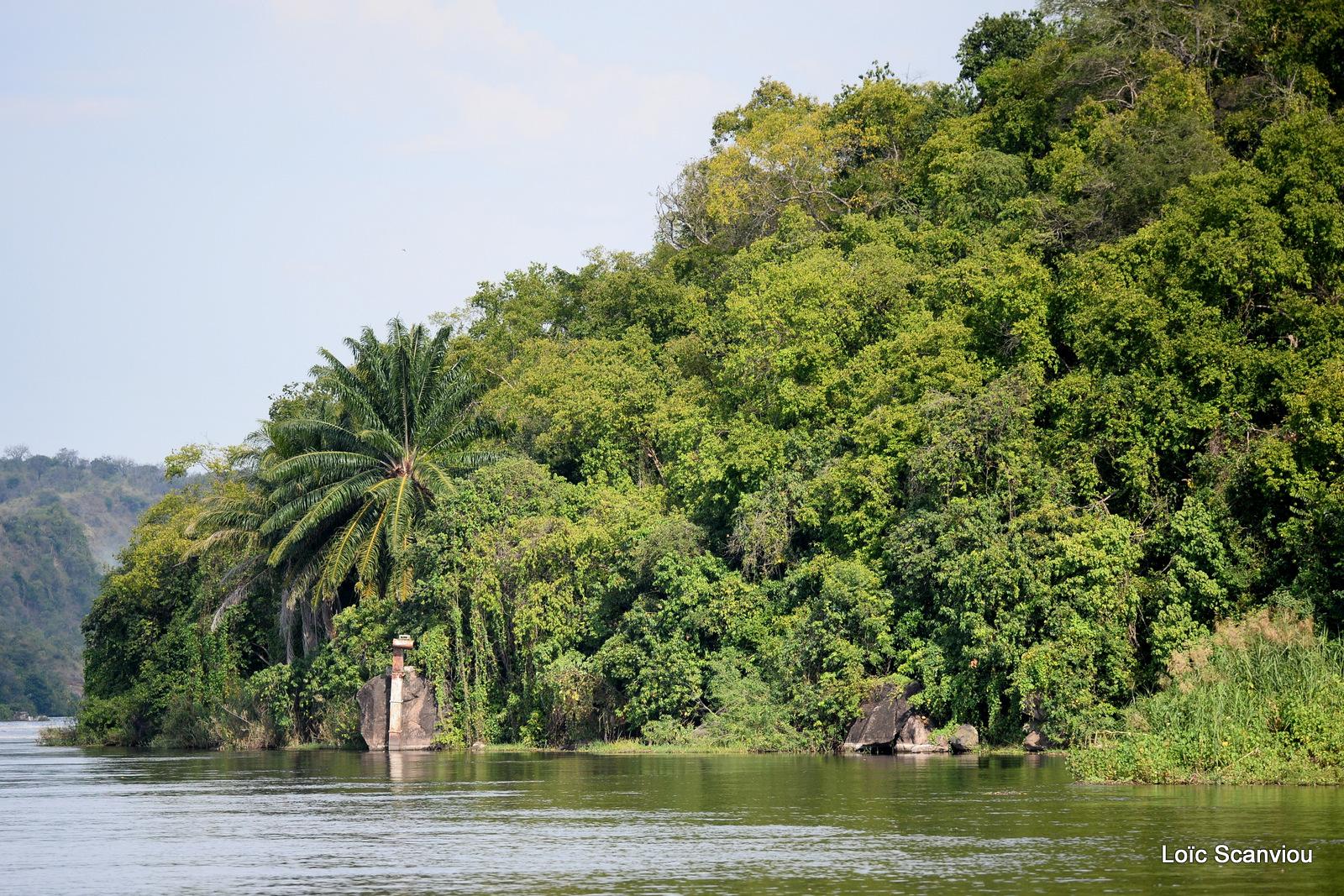 Nil Victoria/Victoria Nile (10)
