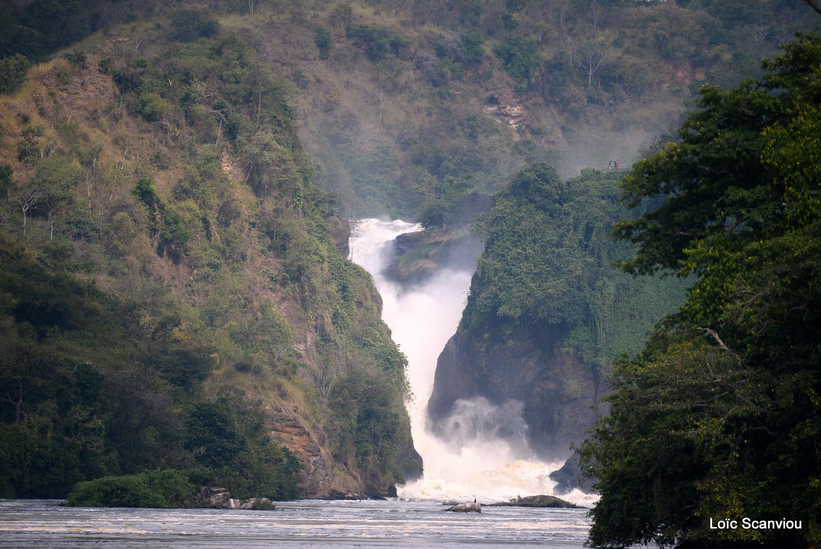 Les chutes de Murchison/Murchison Falls (2)