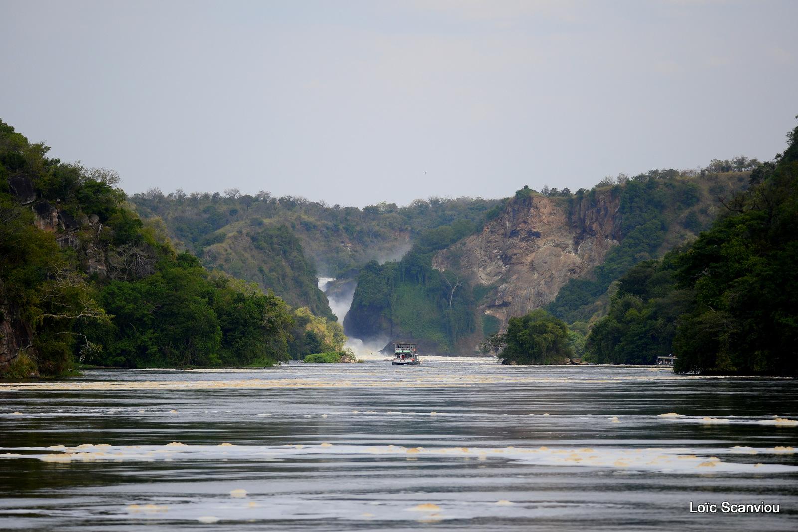 Les chutes de Murchison/Murchison Falls (3)